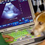 4-ultrasound