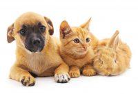 Dog, cat, rabbit.