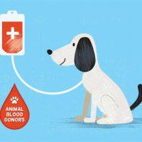 Dog blood donor cartoon