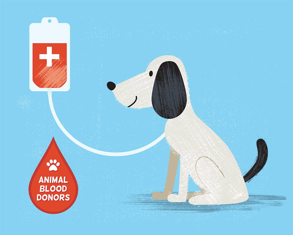 Blood donor dog, cartoon