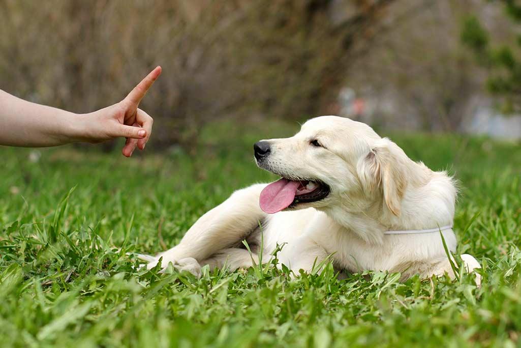 Puppy Training Tips - Holmer Veterinary Surgery