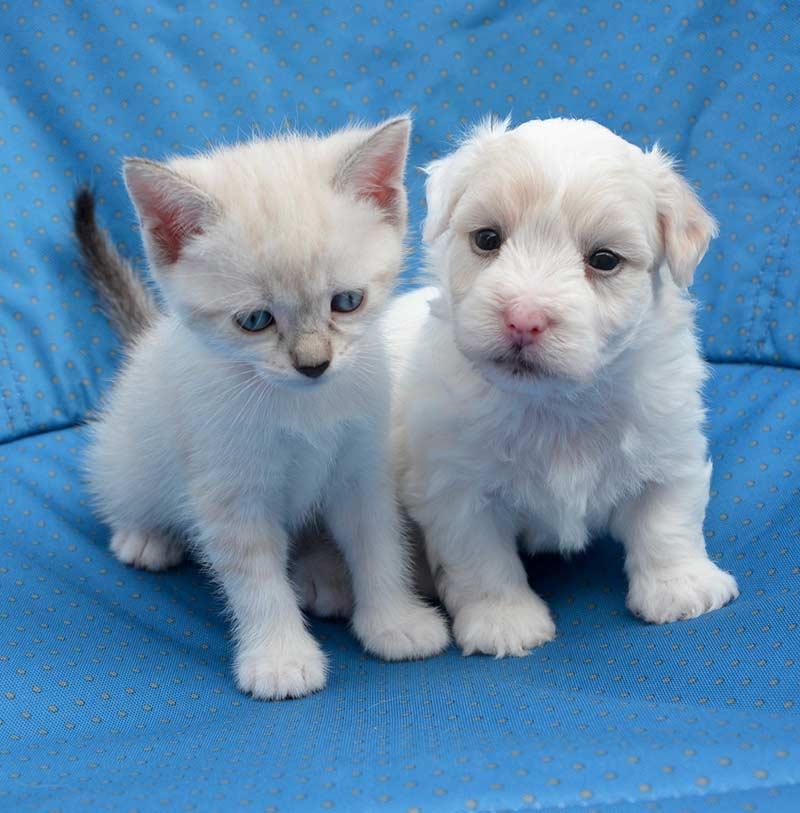 puppy-kitten-2