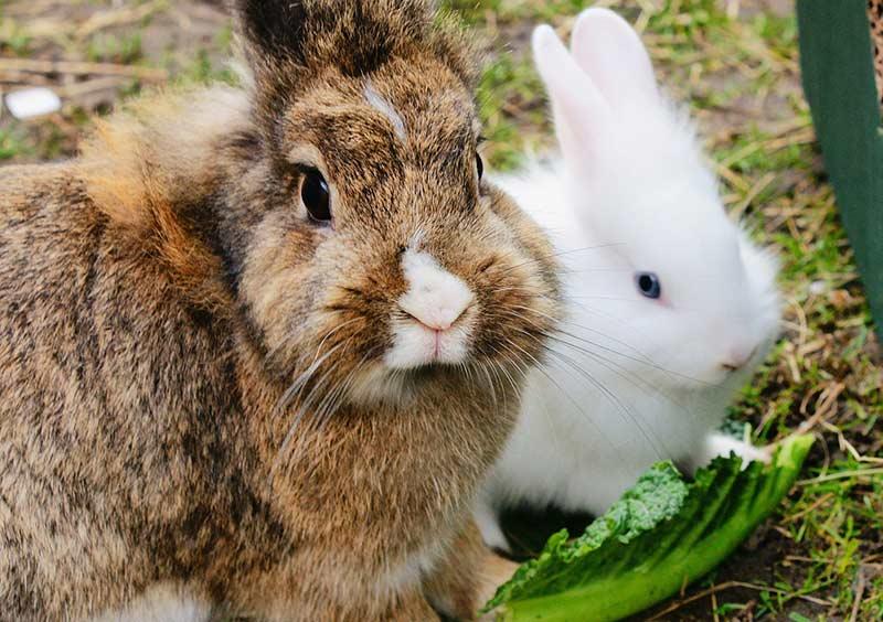 2 rabbits