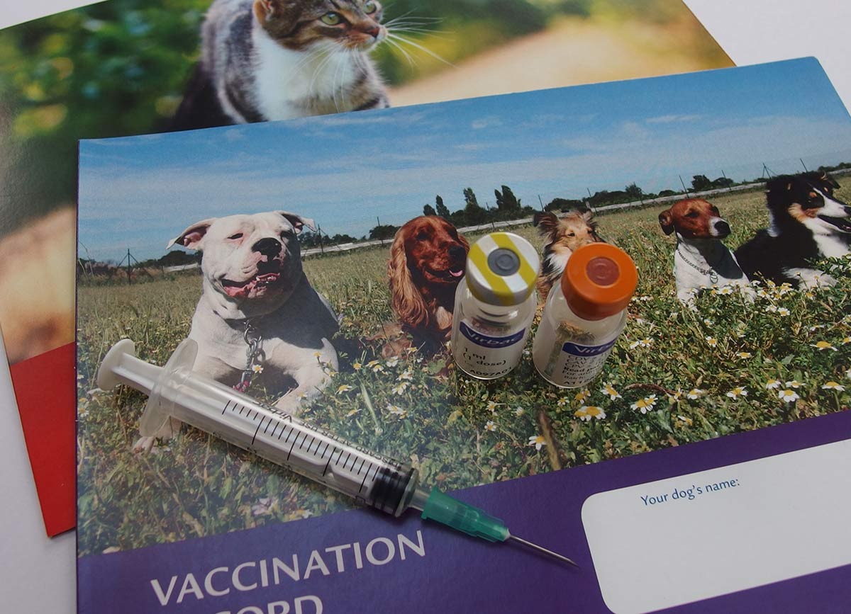 Vaccination cards, syringe.