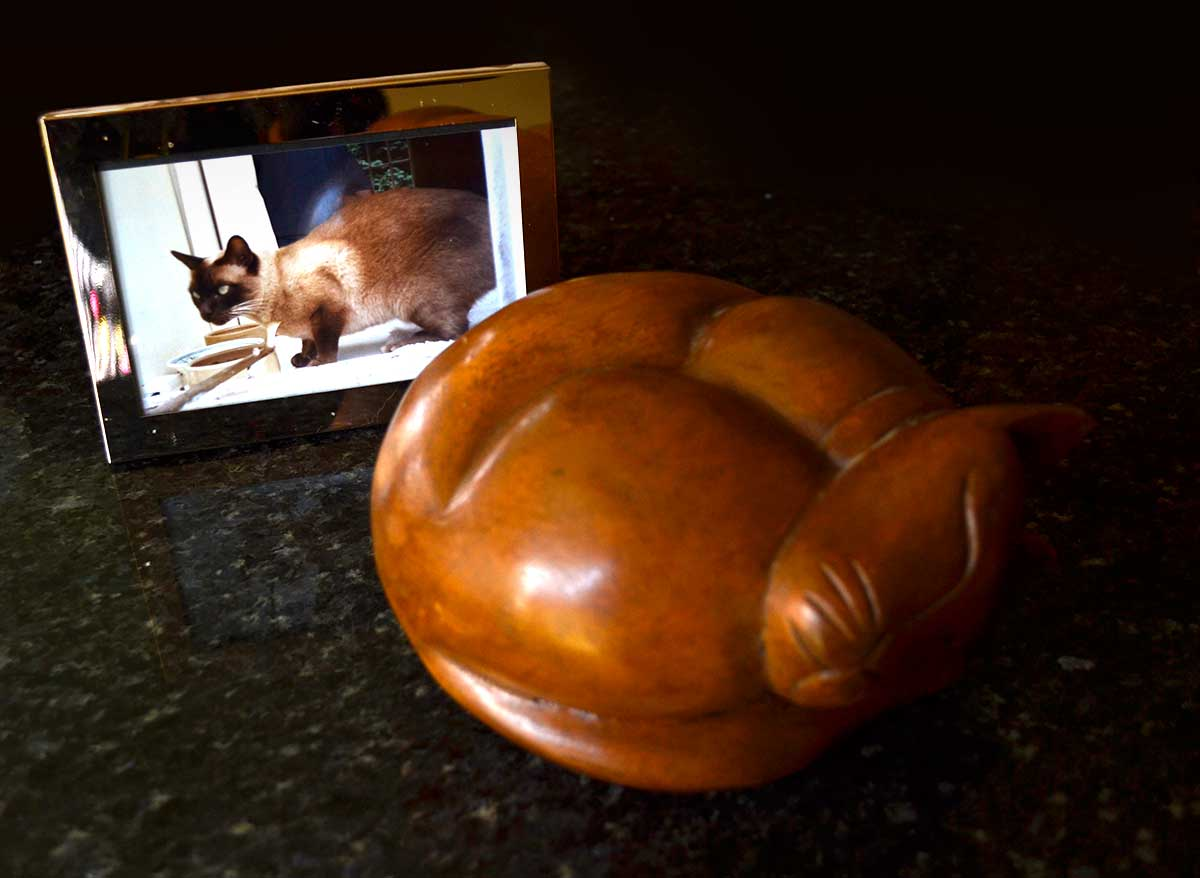 Cat urn and photo.