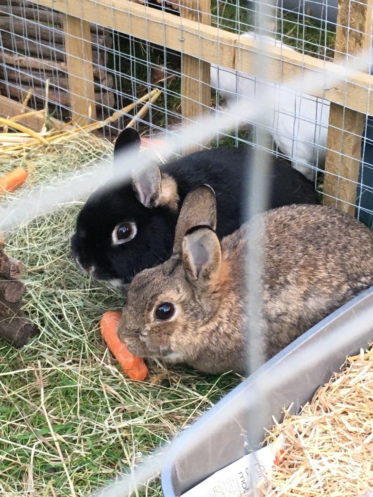bonded rabbits2
