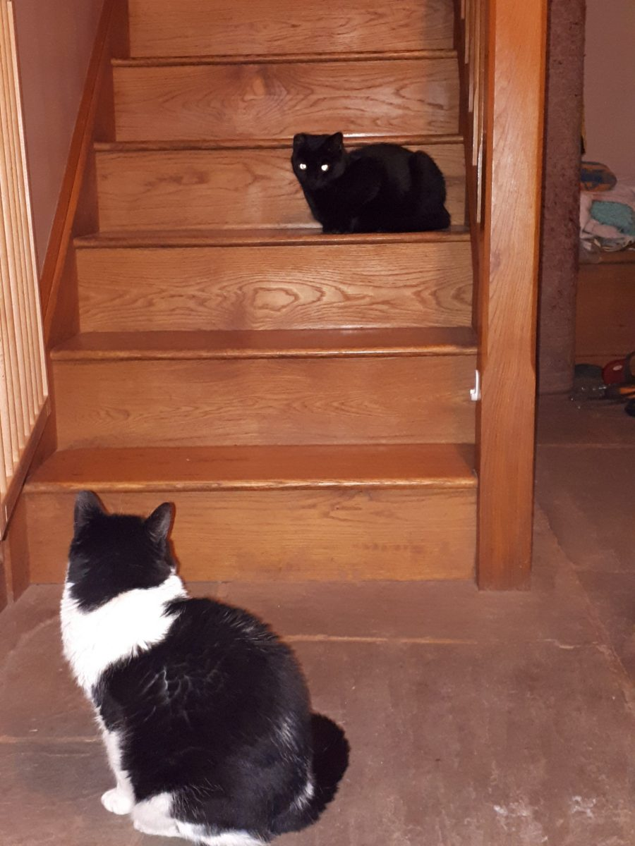 cat passive conflict stairs 3