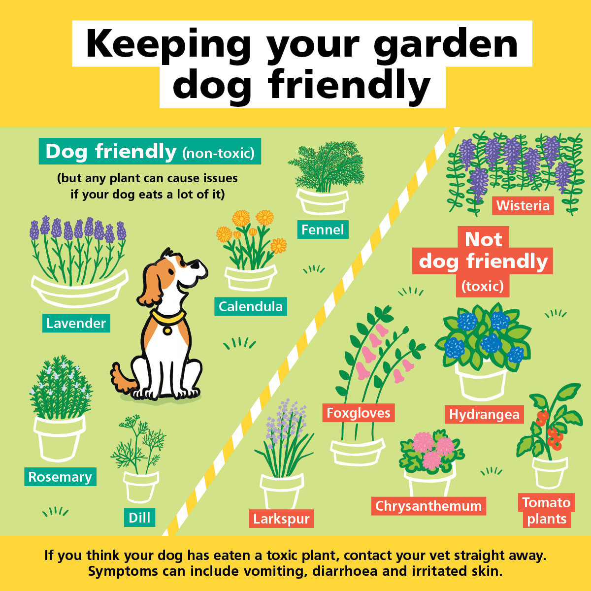 Dog Friendly Garden_1200x1200_v2