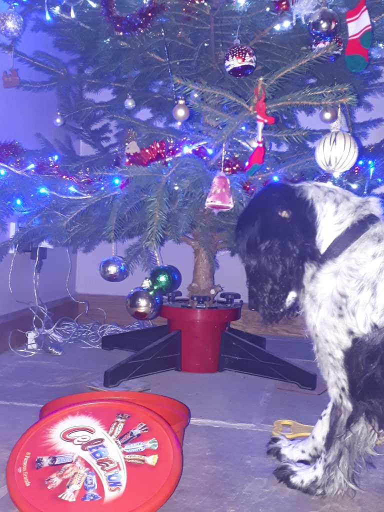 dog by chocolate box