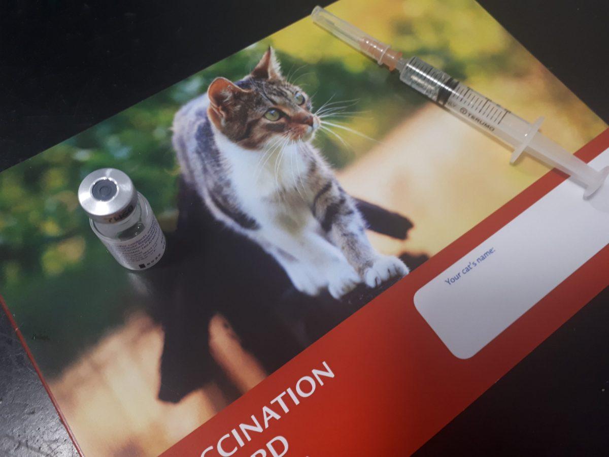 cat vacc card